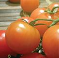 aba-tomate