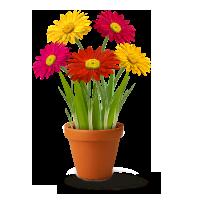 ico-flores
