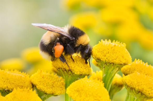 polen3