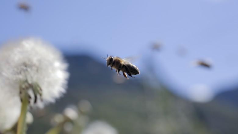 Nos últimos anos, os cientistas observaram o alarmante desaparecimento das abelhas (Foto: Divulgação)