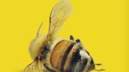 51,92% - Foi quanto diminuiu o número de colmeias, de 1940 até hoje, nos EUA, o país mais afetado pelo problema(Gilles Choen/VEJA)
