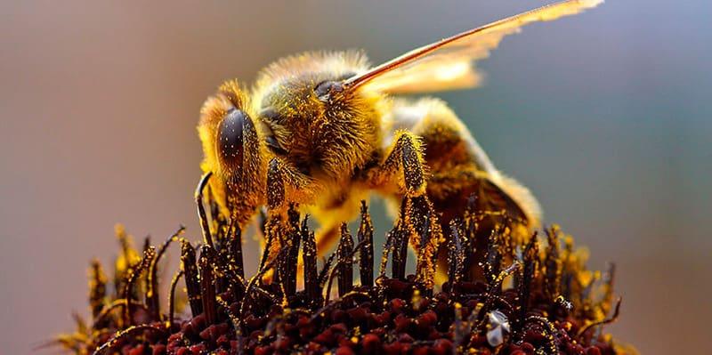 abelhas-ficam-paralisadas-durante-eclipse-tricurioso-1