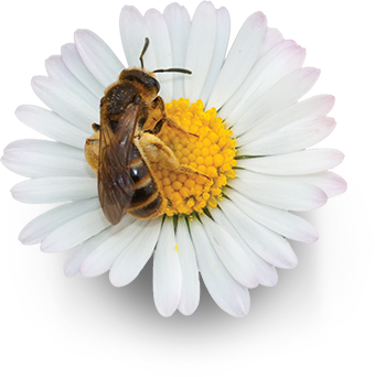 img-abelha-flor